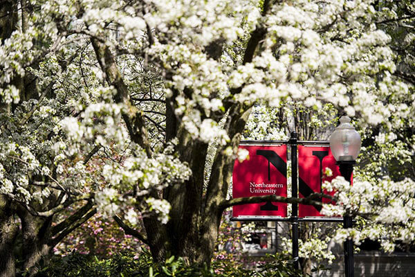 flowering trees with a Northeastern flag