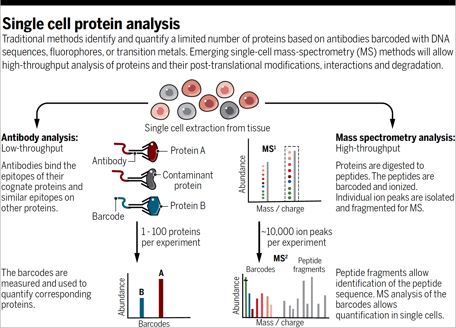 slide of single cell protein analysis