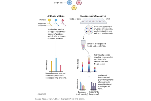Illustration of the two paths to the proteome.